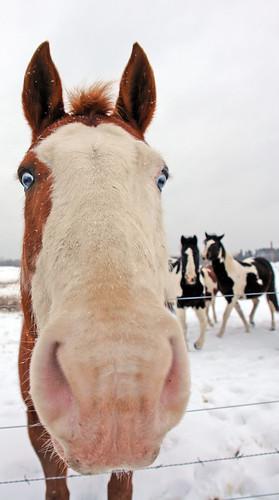 horseswhisper.jpg