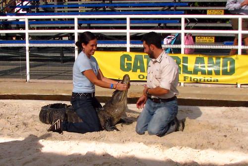 Gator wrestling.