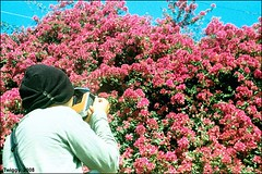 mix x match colors !! (Twiggy Tu) Tags: flowers blue sky film brad taiwan taichung nikonfm2 lomopeoplelomolife hehiscamera ilovepeachcolor nikkor35105mmf35