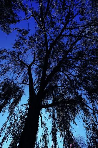 the tree 2