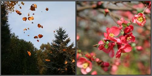 Autumn / Spring