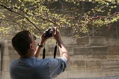 Day 113:    (quinn.anya) Tags: tree spring dad mark tourist photograph universityofchicago day113 martenica  525600minutes