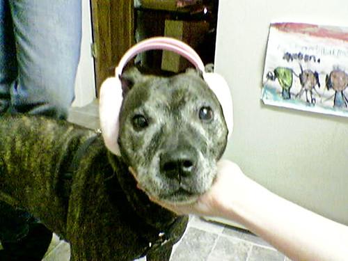 Dog Ear Muffs Fireworks Uk