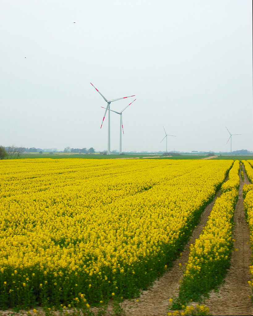 Windpower and biodiesel in Nordfriesland, Germany
