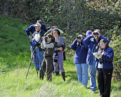 Birdwatching at Nestucca Bay NWR