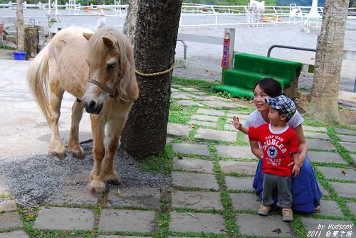 不領情的馬
