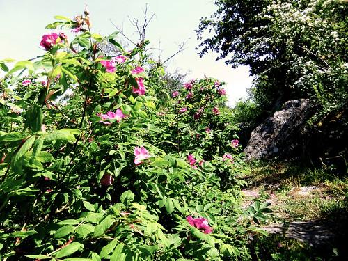 Trädgård 409