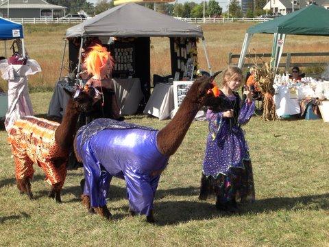 Alpacas in costumes