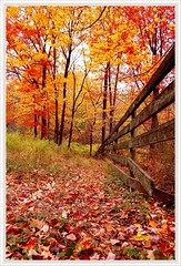 Follow Me? ( Colpo di fulmine ) Tags: autumn path nikon instantfave perfectphotographer diamondclassphotographer flickrdiamond anawesomeshot sasaward thegoldenmermaid amazingtalent vn nature leaves love faith thoughts smile ferroggiaroduboisgalleries photography cherferroggiaro publishedphotographer photosofphotography photosoflandscapes travel amazingnaturephotos photosofseascapes photosoftrees photosofbenches bridges sunsetatsea romance