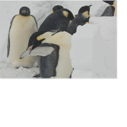 Why Would You Ever Go to Antarctica 2