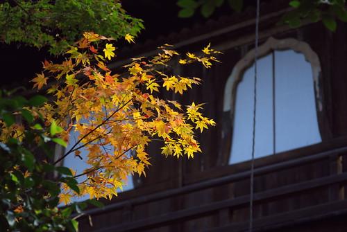 Ginkakuji temple (銀閣寺)