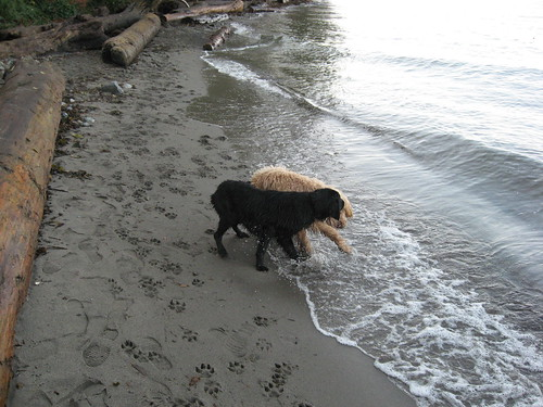 Dogs At Spanish Banks