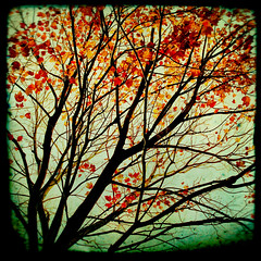 Autumn's alchemy (IrenaS) Tags: blue autumn red orange tree green fall branches photograph fineartphotography bratanesque irenesuchocki fineartphotograph wwwirenesuchockicom