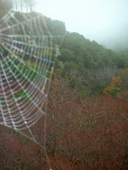 A Glance at the misty wood ... (antifa) Tags: wood mist mountain nature fog forest spider cobweb greece parnonas