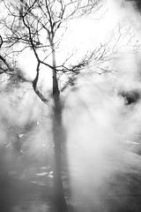 Steaming Tree (Armando Martinez) Tags: light urban bw sun tree silhouette colorado downtown smoke sigma denver steam 28 blake 2008 ls lodo dsp 17thstreet sigma30mm