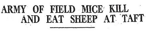 eat a sheep headline