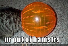 ur out of hamstrs ((     )) Tags: cat funny lol can has cheezburger lolcats lolcode