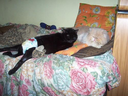 casagreta 7mar2008 in attesa di Striscia la Notizia 100_3148 da Casa Greta.