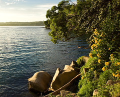 Wildflowers at Chowder Bay( revisited) (Robert Brindley) Tags: nature bay nationalpark sydney australia wildflowers sydneyharbour k10d