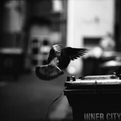 inner city monologues (memetic) Tags: street city urban bw 120 6x6 mediumformat blackwhite inflight alley fuji tl iso400 pigeon melbourne bin d76 rubbish neopan p6 pentaconsix 730 sonnar 180mm firstquality degrave 20degreesc thanksforthefilmjustin finallydevelopedthisrollafterfinishingitafewmonthsago