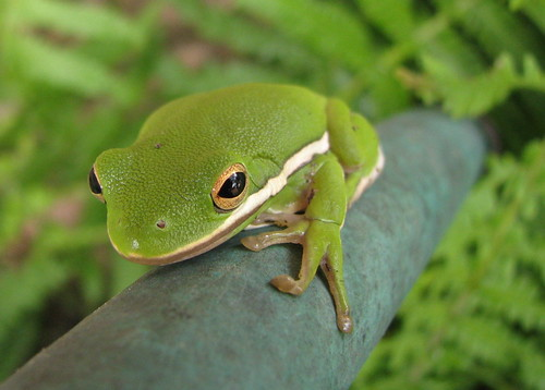 tree-frog 5x7
