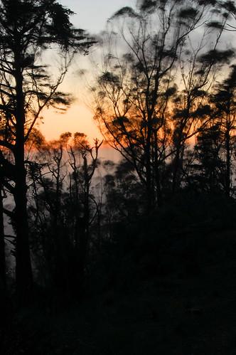 Mt. Davidson Trees