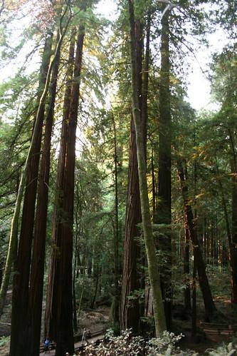 Muir Woods 09/06/2007