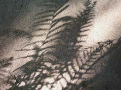 Ferns_by_Sheila_Cunningham