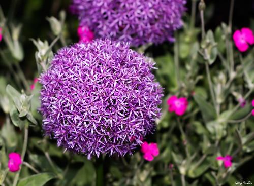 Flower Ball Ball-shaped-flower