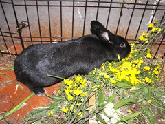 Jupiter likes scotch broom Blooms