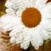 daisy textures 2