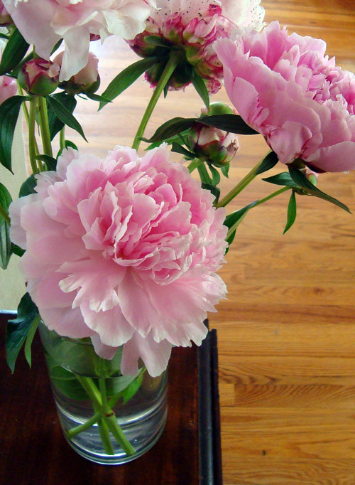 picked-peonies