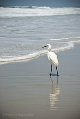 Waiting for lunch (me_schmidt) Tags: california bird beach water coast warm mikeschmidt nikond200 strandsbeach meschmidt