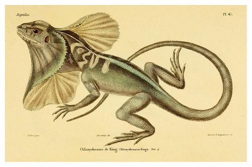 010-Erpétologie générale ou Histoire naturelle complète des reptiles 1834