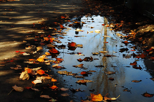 Fall Reflections 4158