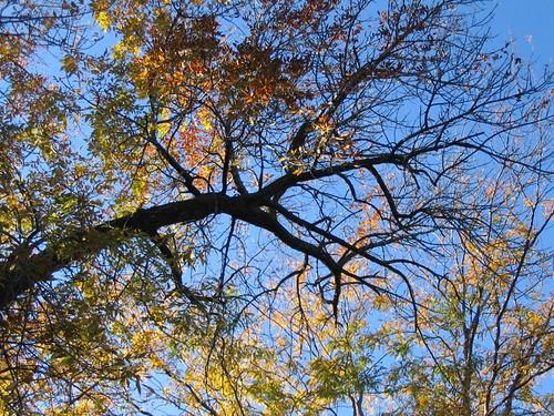 Andersonvile in Autumn