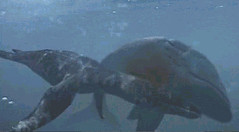 15 Liopleurodon atacks now dead leedsycthiis too