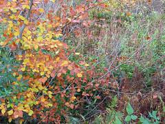Birnam Hill, Perthshire (Martin Beek) Tags: autumn leaves landscape scotland perthshire autumncolours birnam autumnaltints perthshirenovember2007 perthshirelandscape