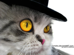 A cat in a Hat (Cotex) Tags: pet hat animal cat eyes cap cortex wawa died cc100 colorphotoaward aplusphoto flickrdiamond goldenvisions