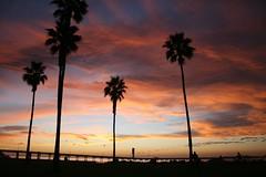 Ocean Beach, San Diego Sunset (Jessica*Rae) Tags: ocean california sunset sky tree beach night clouds coast pier ray pacific sandiego jessica cloudy dusk palm oceanbeach rae ob mcconnell jessicarae jessicaray jessicamcconnell