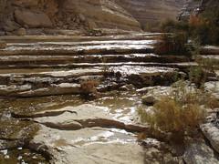 En Mor Spring, Negev Israel (En Avdat)