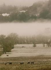 Fog & Snow Ranchscape (judi berdis) Tags: snow fog cattle nca willits mendocinocounty littlelakevalley