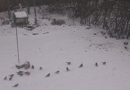 10.28 Snow and Sparrows