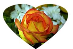 Happy Valentines Day (DanS Photography) Tags: flower love rose friendship valentines wowiekazowie diamondclassphotographer flickrdiamond goldstaraward