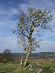 Lonely tree (katrin glaesmann) Tags: england tree landscape yorkshire bluesky landschaft blauerhimmel compactcamera bolsterstone notedited nichtbearbeitet keinphotoshop