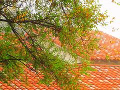 for Nisha with thanks (Sheila in Moonducks) Tags: roof tree dedication nisha smrgsbord cubism fpc blueribbonw