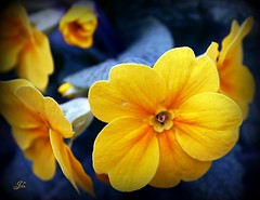 Flower at kearsney abbey (bonksie61) Tags: flower abbey smörgåsbord digitalcameraclub avision almostanything cearsney