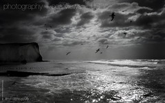 800x500 Stormy English Weather Seaford Beach Desktop Photo (imjustcreative) Tags: wallpaper seagulls beach landscape photography coast desktoppicture seaford desktoppictures desktopphoto roughsea stormyseas desktopphotos seafordhead