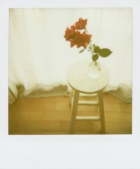 in the morning (mamako7070) Tags: flowers stilllife plants flower polaroid instantcamera sun660 instantfilm filmshot superbmasterpiece diamondclassphotographer
