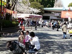 uenosakura (39) (davidjapan) Tags: park cherry ueno blossom sakura hanami kirschbluete